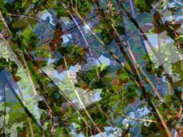 Fotomontage de hojas y ramas
